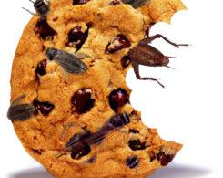 cricket-cookie.jpg