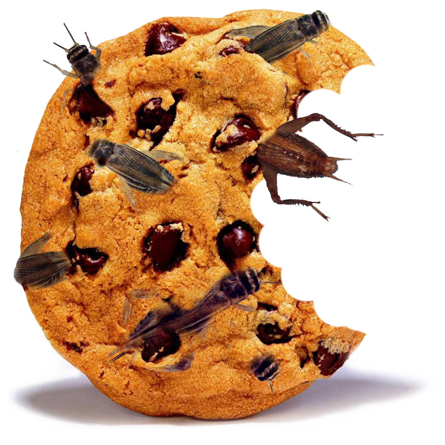 cricket-cookie