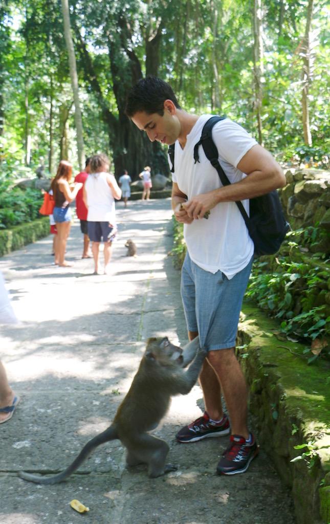 abe-monkey-forest