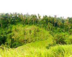 camphuan-trail-ubud-bali.jpg