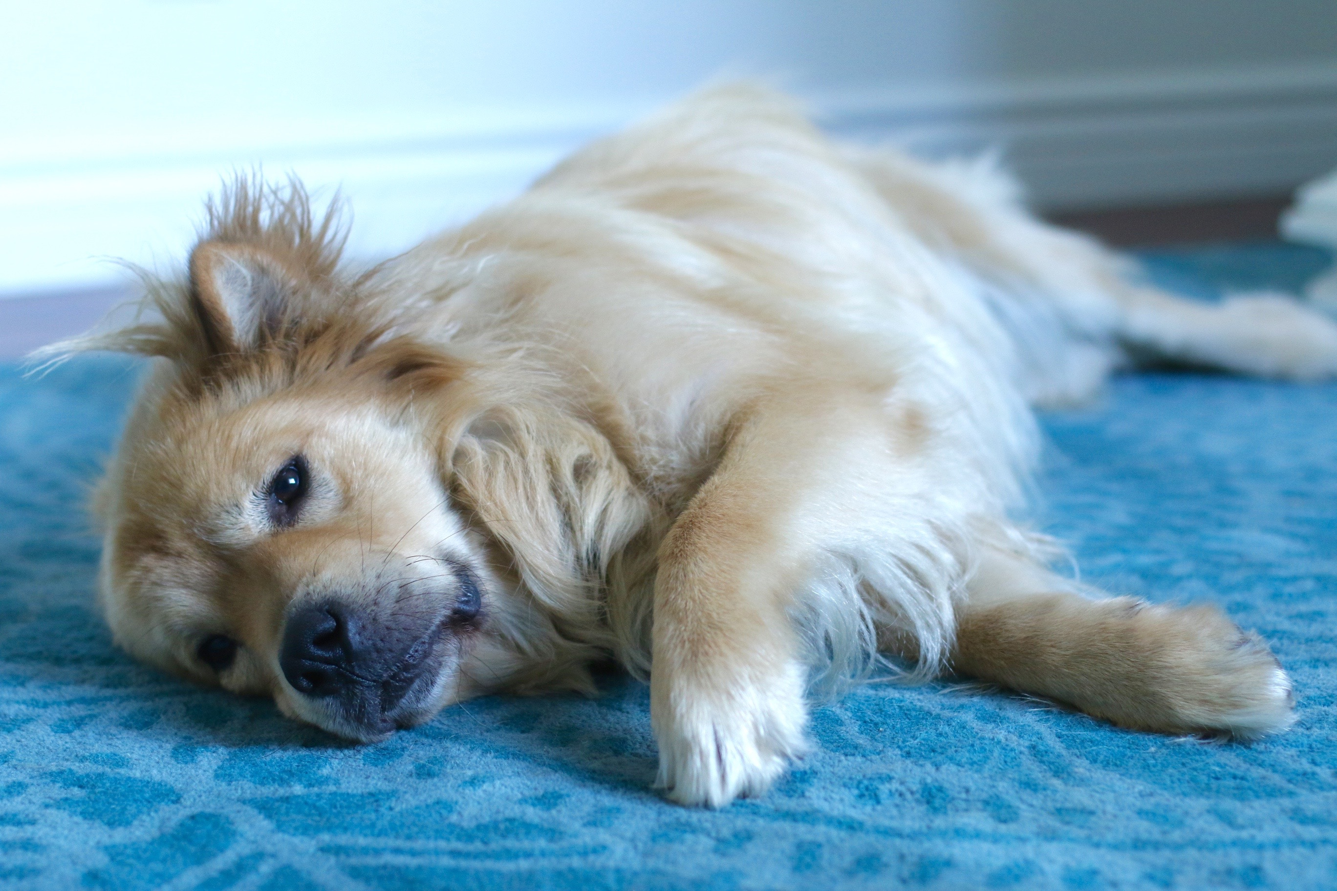 Pet Dog Aloof At Times