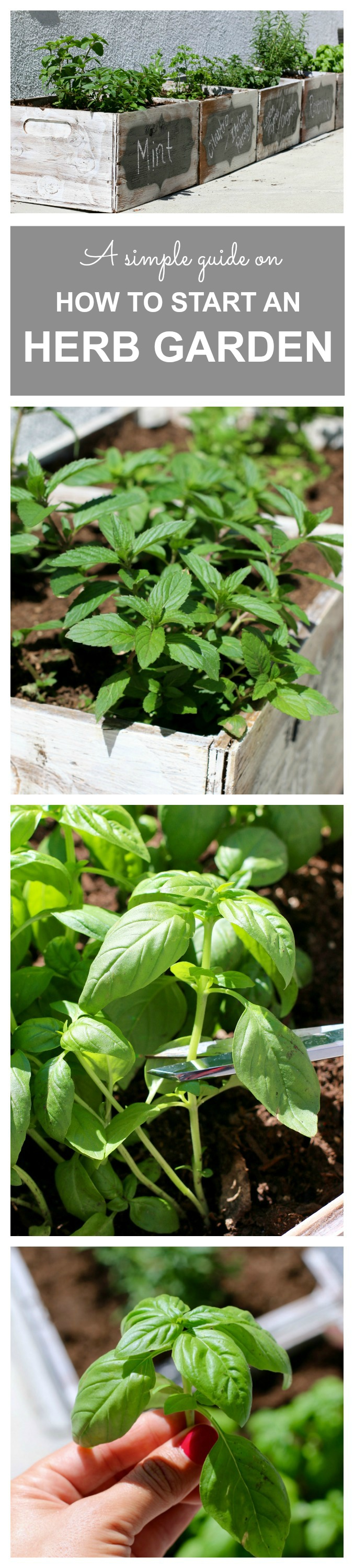 How to start an herb garden - a quick, simple guide.