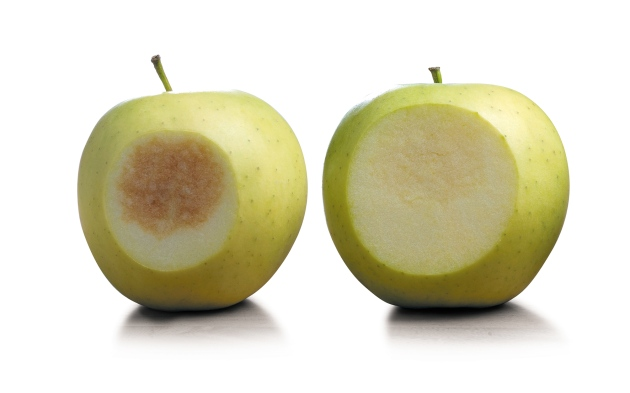 GMO apple doesnt brown