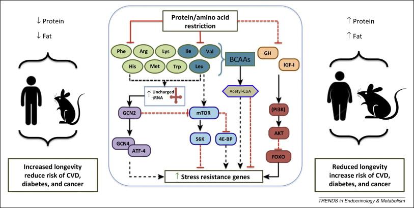 protein restriction
